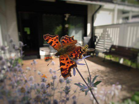 Butterfly, Insect, Animal, Animals, Terraced House