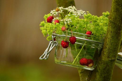 Strawberries, Wild Strawberries, Walder Berries