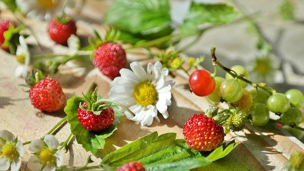 Strawberries, Wild Strawberries, Daisy, Still Life