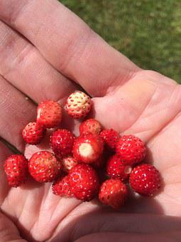 Summer, Berry, Wild Strawberry, Red
