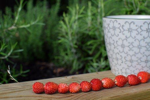 Wild Strawberry, Summer, Berry, Red, Garden