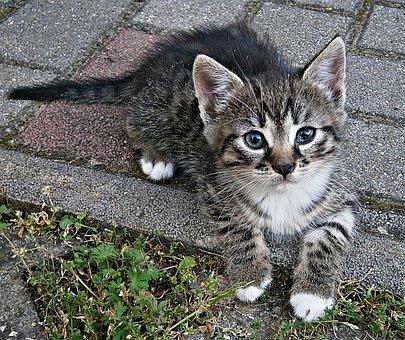 Cic-mic, Kitten, Small