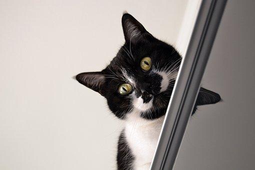 Cat, Black White, Cat Over Piece Of Furniture, Indoor
