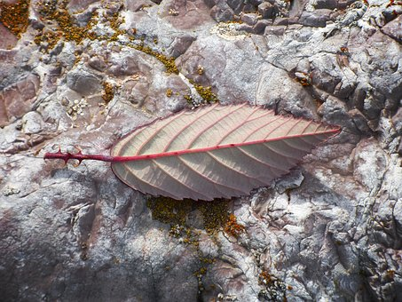 Leaf, Reverse, Detail, Blackberry, Thorns