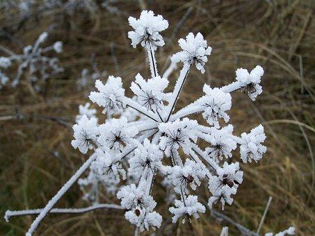 Winter, Hoary, Rimy, Nature