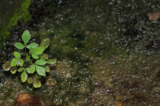 Plant, Moss, Plant In Moss, Green, Grass, Macro, Nature