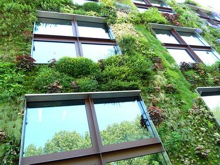 Eco, Ecohaus, Plant, Planted, Nature, Botany, Garden