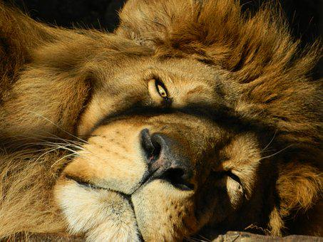 Leo, Dream, Pry