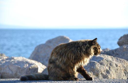 Cat, Strays, Tortoise Shell, Sea, Sun, Rock