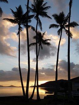 Hawaii, Holiday, Palm Trees, Sea, Travel, Landscape
