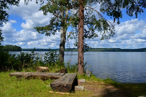 Lake, Beach, Finnish, Summer, Tree, Lake In Finland