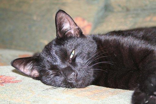 Cat, Feline, Animal, Pet, Domestic, Black, Sleeping