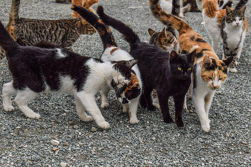 Cats, Feral, Feline, Animal, Outdoor, Together, Friends