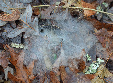 Spiderwebs, Forest Floor, Nature, A Night's Spinning