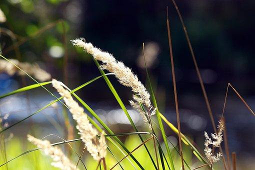 Blade, Blade Of Grass, Grass, Meadow, Nature, Summer