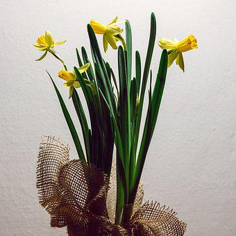 The Narcissist, Yellow, Flower, Dramatic Light