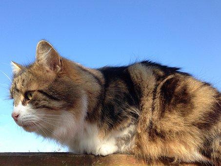Cat, Tabby, White, Sky, Blue, Pet, Feline, Kitty