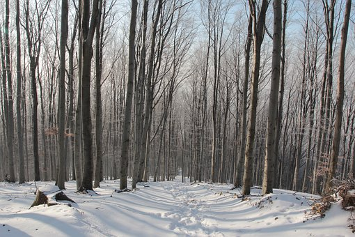 Winter, Forest, Tree, Spacer, Snow, Poland, Way
