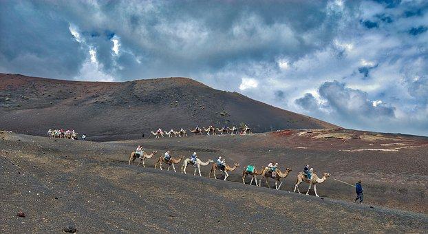 Camels, Caravan, Desert, Sand, Animal, Landscape, Dune
