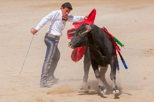 Bolsin, Bullfight, Bull, Arena, Toreador, Feria