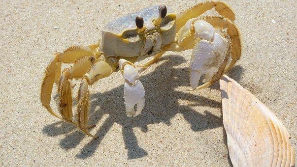 Blue Crab, Shell, Sand