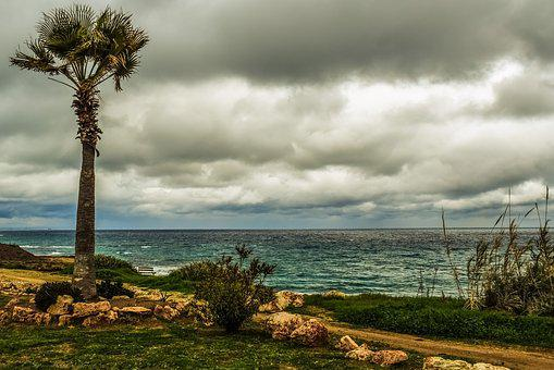 Palm Tree, Coast, Sea, Coastal Path, Sky, Clouds