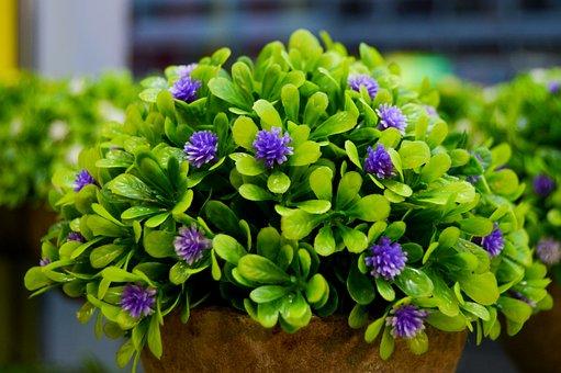 Purple Flowers, Flower Vase, Flower, Green Leaves