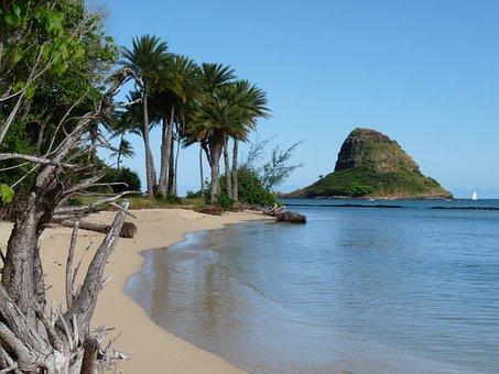 Hawaii, Beach, Coast, Summer, Ocean, Sun, Holiday, Oahu