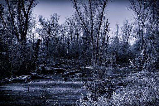 Swamp, Nature, Night, Full Moon, Moor, Mystical, Jungle