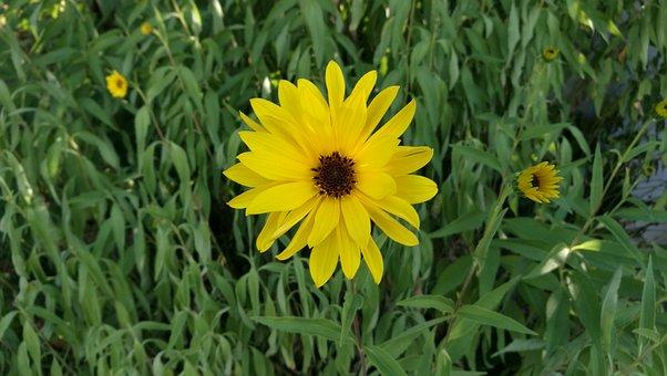 Flower, Summer, Marguerite, Grass
