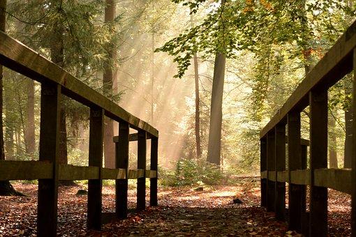 Delmenhorst, Tiergarten, Bridge, Autumn, Forest, Mood