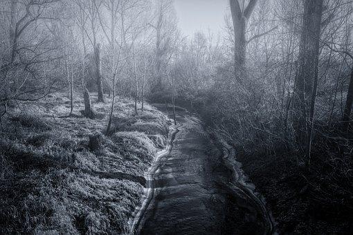 River, Frozen, Fog, Water, Winter, Cold, Trueb, Mood