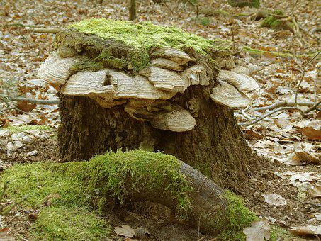 Tree Stump, Moss, Forest, Nature, Green, Morsch