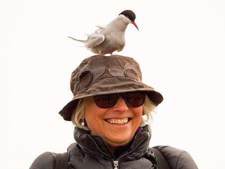Arctic Tern, Wildlife, Bird, Tern, Arctic, Nature