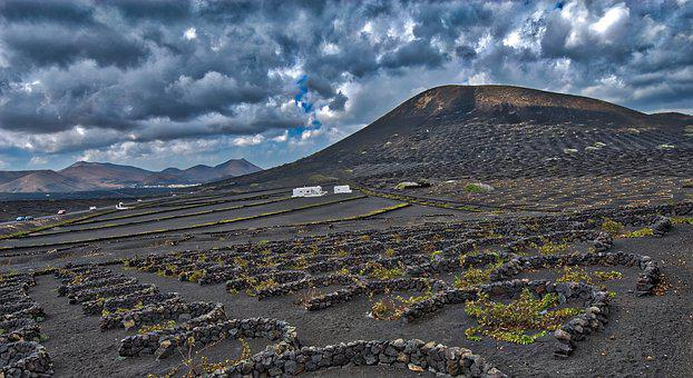 Mountain, Wine Maker, Vines, Wine, Winemaking