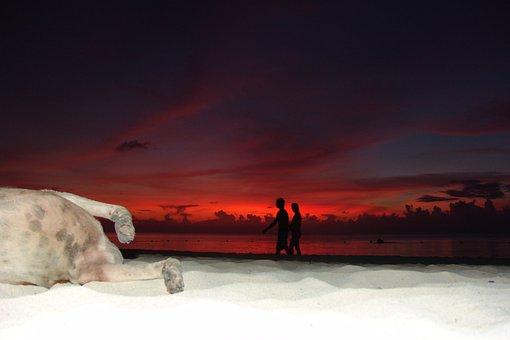 Dog, Beach, Drunk, Jamaica, Beer, Sunset