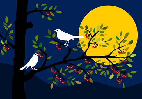 Animals, Birds, Tree, Berries, Night, Moonlight