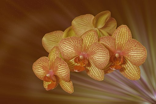 Flower, Blossom, Bloom, Orchid, Panicle, Plant, Nature