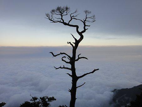 Clouds, Giant Tree, Sam Rainsy