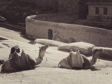 Camel, Egypt, Africa, Dromedary, Animal, Desert, Travel
