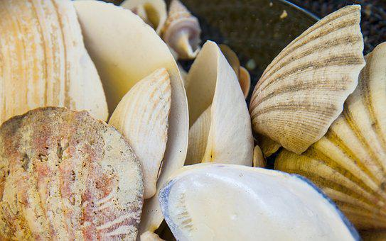 Clam, Low Tide, Beach, Sea, Shells, Mussels