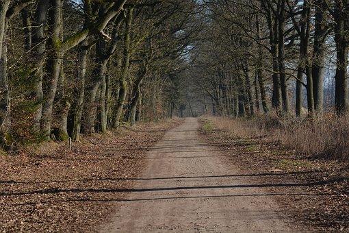 Nature, Away, Möchsweg, Forest Path, Landscape