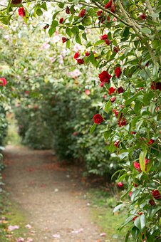 Roses, Passage, Floral, Romantic, Bloom, Blossom