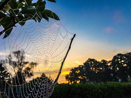 Dew, Cobweb, Summer, Sky, Yellow, Blue, Nature