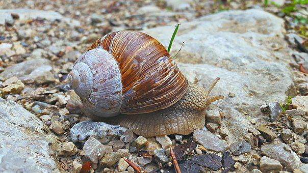 Snail, Ground, Forest, Shell, Nature, Animal, Slowly