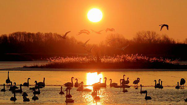 Landscape, Sunrise, Lake, Frozen, Winter, Swans