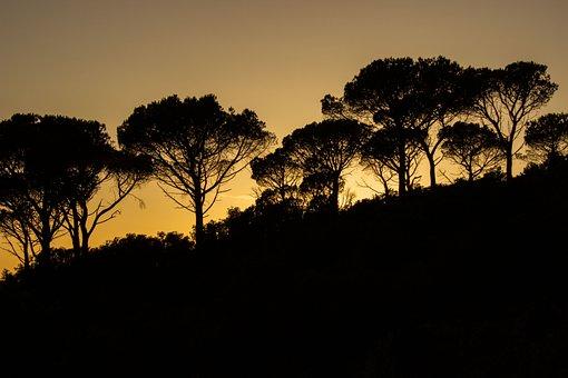 Abendstimmung, Tuscany, Italy, Transversely Veto