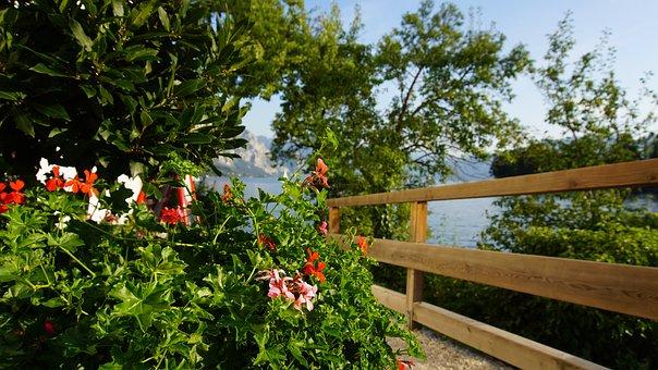 Traunsee, Flowers, Wood Plank, Lake, Tree, Waters