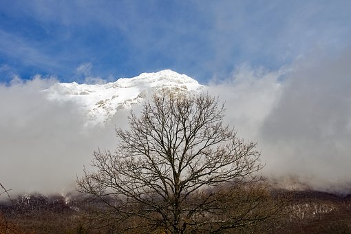 Gran Sasso, Tree, Branches, Snow, Fog, Mountain
