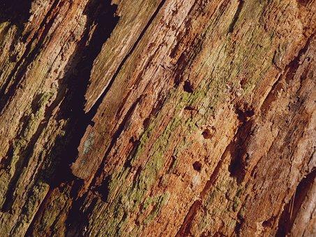 Tree Bark, Bark, Background, Log, Tree, Wood, Structure